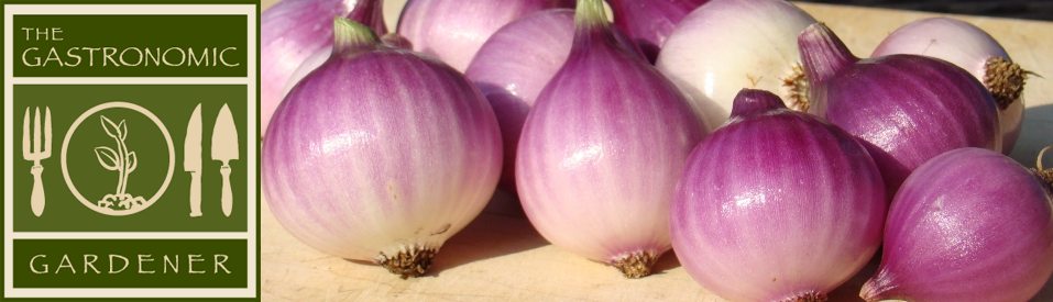 headeronion.png