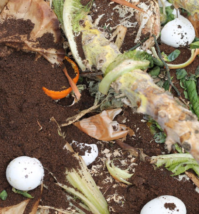 Compost Featured