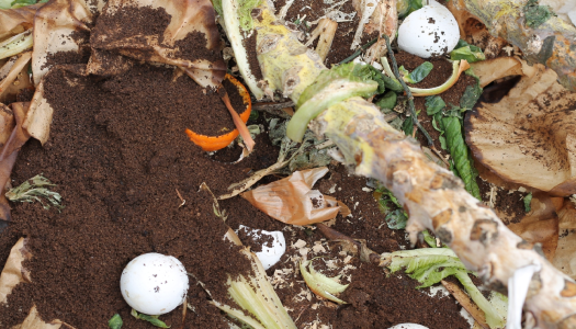 What happens in the compost pile