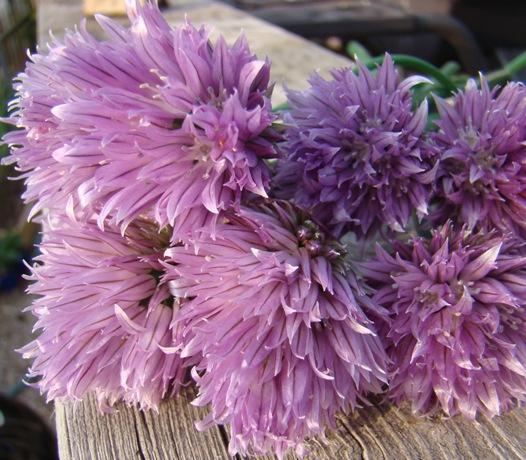 Chive Blossom Vinegar