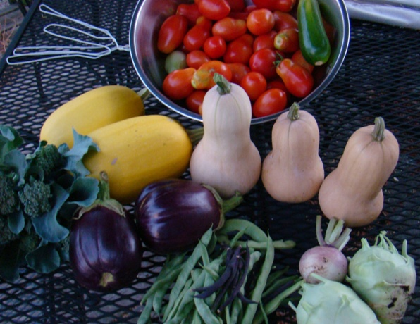 Post image for Harvest Monday – 8/13/2012