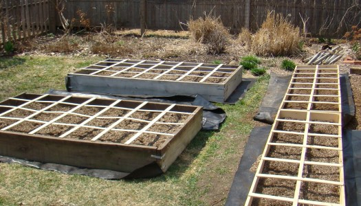 Filling the Raised Box Garden beds